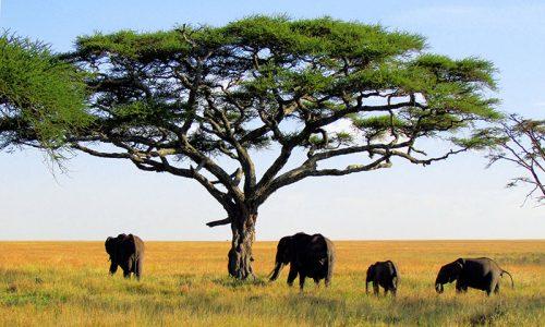 Afrika'daki Hayvan Çeşitliliği